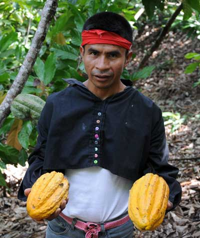 Cacao Grower